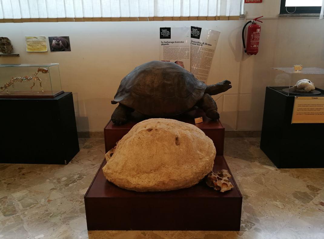 Museo Geologico G.G. Gemmellaro di Palermo